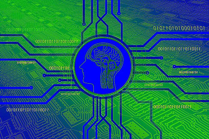 Мозг человека функции и строение